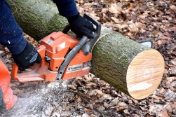 cutting-wood-2146507_960_720